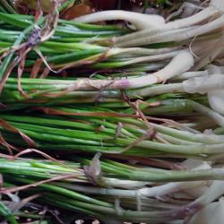 Kuchai, tanaman pangan yang tumbuh subur di Kasepuhan Cibedug